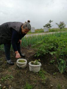 Uzgajanje povrća u kolektivnom centru Bergen, Gračanica – Growing vegetables in Bergen Collective Shelter, Gracanica
